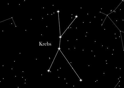Sternbild Krebs